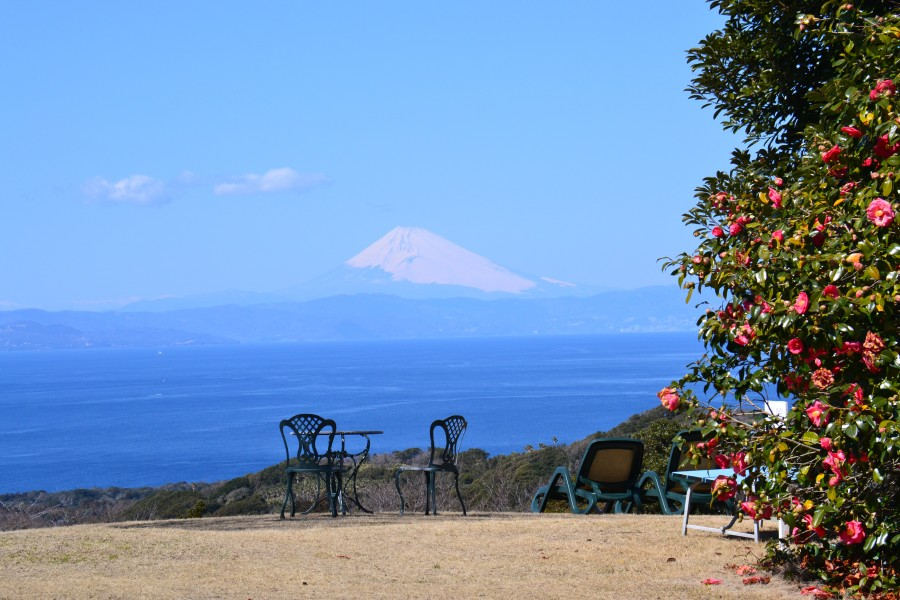 Beautiful view of Mt. Fuji from the Tsubaki-Hana (camellia) Garden and its seasonal flowers.