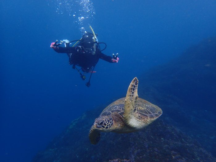 Hachijojima Sea turtles