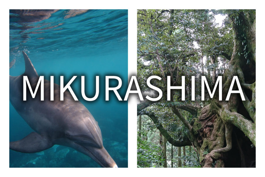 Mikurashima Island: Swimming with Wild Dolphins and Seeing 700 Giant Trees